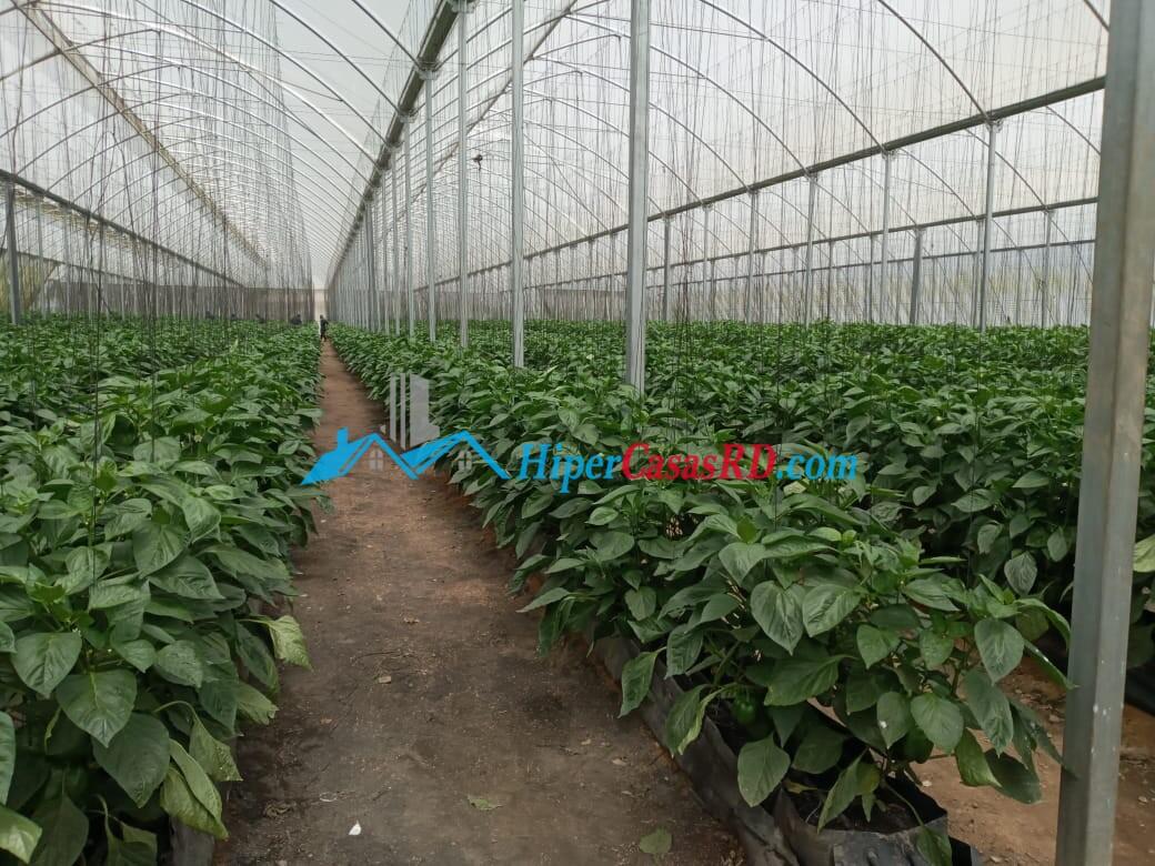 Invernadero en San José de ocoa